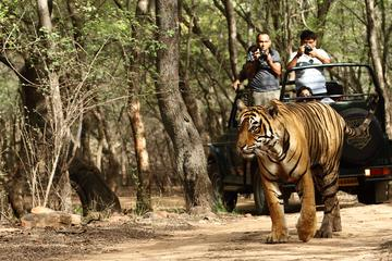 Private 6-Day Ranthambhore Tiger Tour from Goa including Delhi, Agra and Jaipur