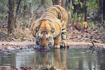 Ranthambhore Tiger Tour of Delhi Agra ...