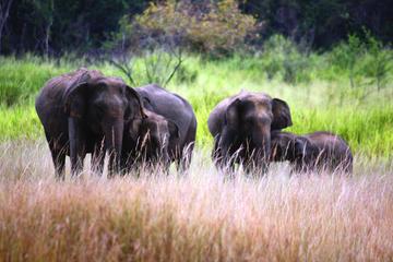 Excursion privée de 7nuits: excursion complète du Sri Lanka
