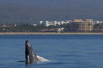 プエルトバジャルタのクジラウォッチングクルーズ