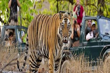 Private 2-Night Ranthambore National...
