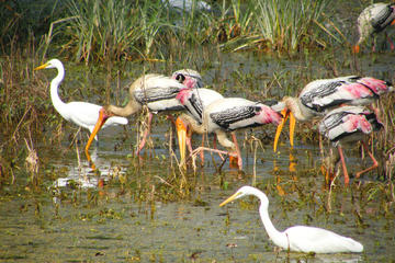 Day Trip to Bharatpur Keoladeo National Park and Abhaneri...