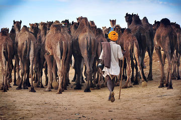 Private Day Trip to Pushkar from Jaipur With Transfer to Jodhpur
