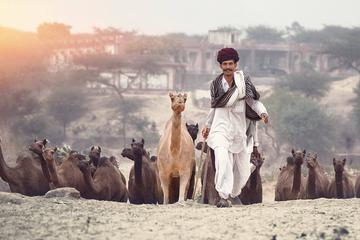 Private One-Way Transfer from Jodhpur to Jaipur via Pushkar