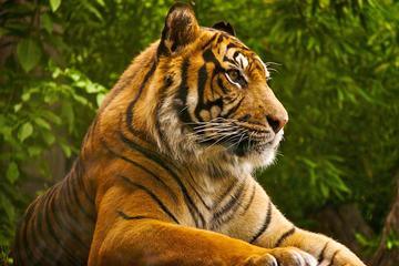 Private Tour: Overnight (2 Days) Ranthambore Tiger Safari Tour From Jaipur