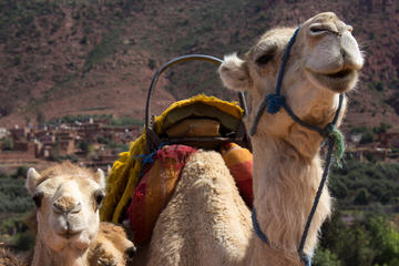 Private Camel Ride in High Atlas Mountains from Marrakech