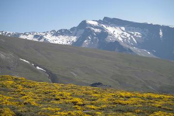 Tour safari in fuoristrada della Sierra Nevada a Granada