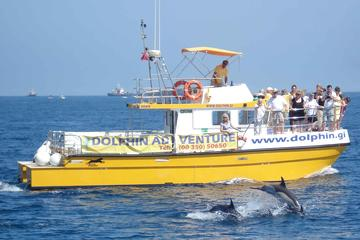 Dolphin Watching Excursion in Gibraltar