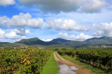 Excursão privada: excursão vinícola...