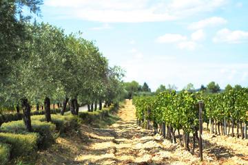 Excursão vinícola e de oliveiras de...