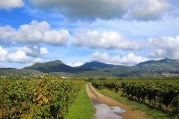 Private tour: Exclusive Wine Tour in Languedoc from Montpellier