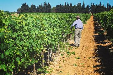 Small-Group Half-Day Languedoc Wine Tour from Sète
