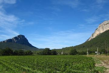 Visite en petit groupe, vins et olives du Languedoc au départ de...