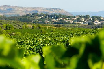 Visite en petit groupe, vins et olives du Languedoc avec déjeuner au...