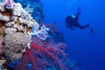 Portugal Eco-Diving Experience