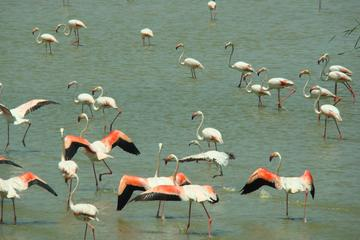 Donana National Park and El Rocío: 4x4 Guided Tour from Seville