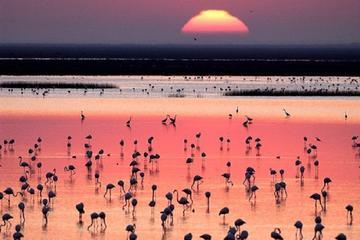 El Parque Nacional de Doñana...