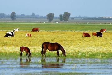 Nationalpark Doñana: Geführte Tagestour ab Sevilla im Geländewagen