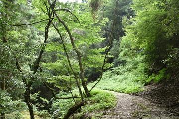 Hiking Adventure in Mt Kasuga Primeval Forest