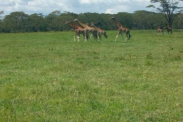Tagesausflug zum Nakuru Nationalpark