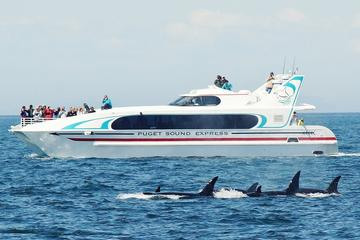 Excursion d'observation des baleines à Seattle