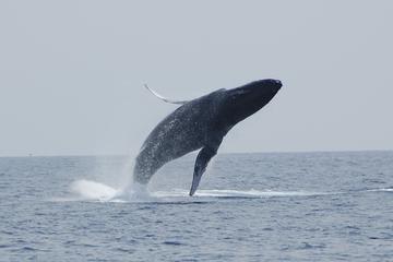 Avistamiento de ballenas en Isla...