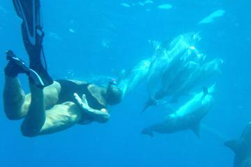 Mergulho com snorkel e golfinhos selvagens