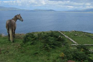 Luxury Photography Day Tour on Ring of Kerry and Skellig Ring - Fully Guided and Chauffeured