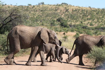 Day Safari from Johannesburg to Pilanesberg with an open vehicle...
