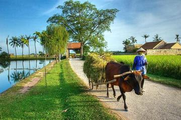 Hanoi: Duong Lam Historical Village Private Day Tour