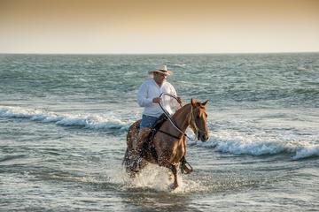 Tour d'équitation dans un cheval...