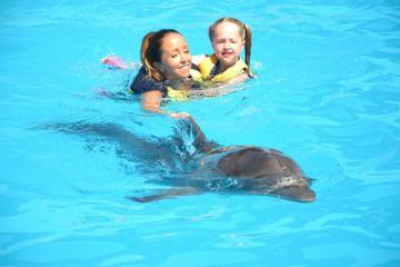 Nadar entre golfinhos selvagens