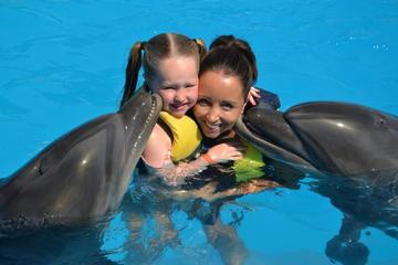 Nade com os golfinhos em Sharm el Sheikh