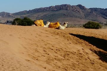 Safari Day Trip from Agadir