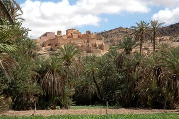 Tiout Oasis and Taroudant Guided Day...