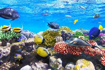 9-Hour Snorkeling and Meditation Tour Hurghada