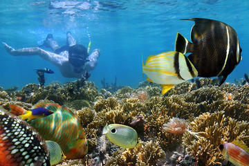 Snorkeling trip and excursion from Safaga Port in hurghada