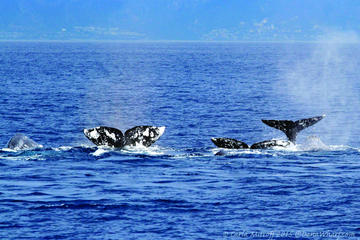 Book Private Whale and Dolphin Adventure 2-Hour Excursion in Dana Point on Viator