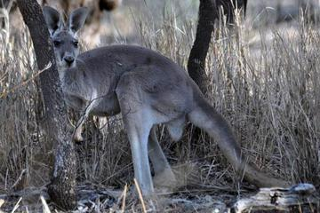 8-Day Authentic Outback Adventure Tour of Cunnamulla Including...