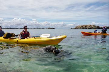 アシカとペンギンの島またはペロン岬を行くパース…