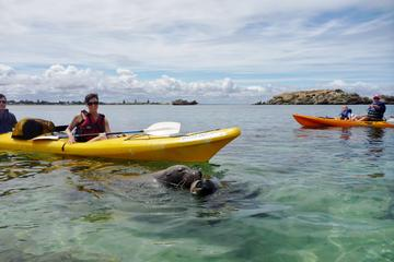 Seal Island and Penguin Island or Point Peron Sea Kayak Tour