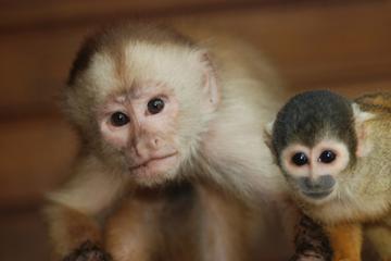 4-Day Amazon Jungle Tour at Refugio Amazonas