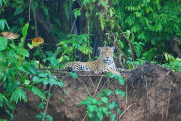 4-Day Amazon Jungle Tour at Tambopata Research