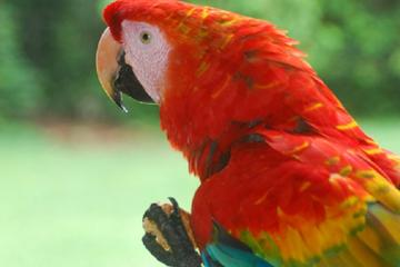 Aventura de 3 días en la selva amazónica en Corto Maltés Lodge