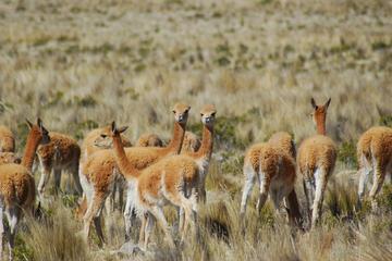 Excursão particular de 2 dias pelo Vale do Colca saindo de Arequipa...