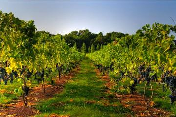 Varna Horses and Vines Tour
