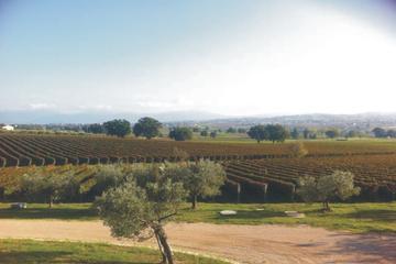 Excursion privée à la découverte des vins de Toscane au départ de...