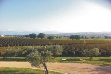 Private Tuscany Wine Tour Experience from Florence