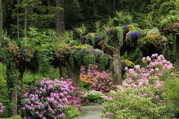 Aventura na floresta tropical de Glacier Gardens em Juneau