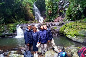 Lamington National Park Hike from the...